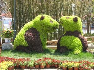 Ursuleti la Shanghai. Foto:Calin Hera (MfC)