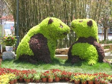 Ursuleti la Shanghai