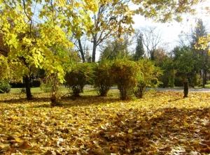 Piesaj de toamnă, în Parcul Herăstrău. Foto: Calin Hera