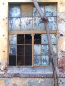 Mâţa Ţuşti, hlizindu-se din întunericul unei clădiri dezafectate din centrul Bucureştiului. Foto: (cu telefonul): Călin Hera