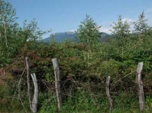 Gard, tufişuri, munţi. FOTO: Călin Hera