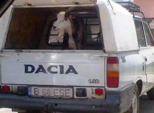 """Capră în portbagajul unei Dacii """"Papuc"""" - contribuţie la MFR. FOTO: Călin Hera"""
