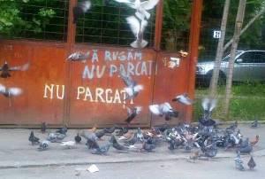Micul dejun al porumbeilor. Se înţelege de ce nu trebuie parcat acolo. FOTO (cu telefonul): Călin Hera