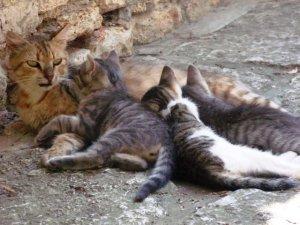 Grup de pisici tolănite în curtea Castelului construit de Regina Maria. Foto: Călin Hera (pentru MFC)