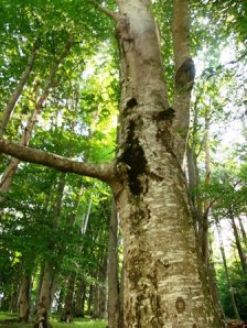 Detaliu dintr-o pădure în care am stat să privesc până şi copacii. Foto: Calin Hera