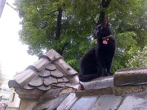 Vedere din Bucureşti. Pisica neagră şi răsfăţată, pe gard. Foto: Călin Hera (cu telefonul)