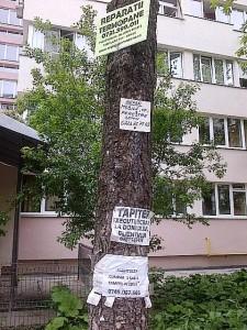 Un copac chinuit de avântul publicitar al micului întrerprinzător din Sectorul 3. Foto: Călin Hera (cu telefonul)