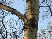 București - copac cu ochi. Foto: Calin Hera