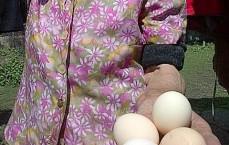 Ouă proaspete. Foto cu telefonul: Călin Hera