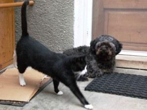 Câinele şi pisica. Doi prieteni de voie, de nevoie, pe acelaşi prag de uşă. Foto: Călin Hera