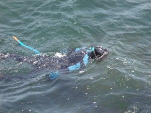 Vedere de la mare. Ce-o fi căutat acest scafandru? Foto: Călin Hera
