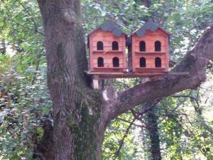 Căsuţe pentru păsări în Parcul Stirbey. Foto: Călin Hera