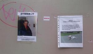 Vedere din Bucureşti. S-au pierdut un om şi-un câine. Foto (cu telefonul): Călin Hera (mfc)