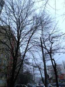 Vedere din Bucureşti. A 31-a zi fără soare. Coafura rezistă. Foto: Călin Hera