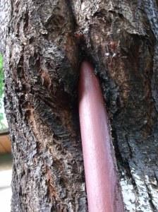 copac flamand
