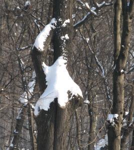 Fantoma din Herăstrău. Foto: Călin Hera