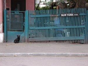 Vedere din Bucureşti. Câine aşteptând o ocazie să viseze aiurea. Foto: Călin Hera (mfc)