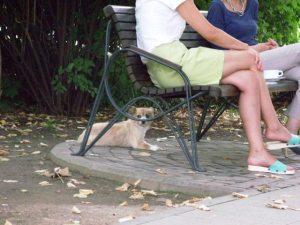 Vedere din Bucureşti. Douăsprezece picioare. Foto: Călin Hera (mfc)