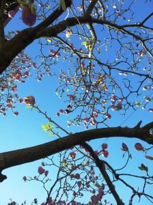 Vedere din Bucureşti. Mica Împărăţie a Magnoliilor. Foto cu telefonul: Călin Hera