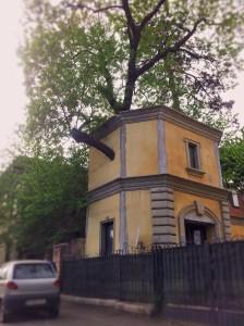 Vedere din București. Copac cu personalitate fotografiat pe Splaiul Independenței. Foto cu telefonul: Călin Hera