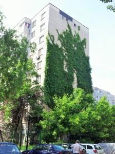 Vedere din București. Idee de reabilitare termică ieftină și aproape spontană în Sectorul 3. Foto cu telefonul: Călin Hera