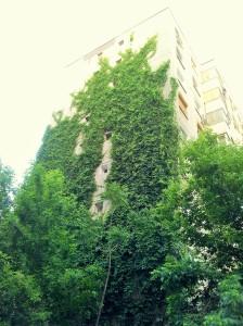 Vedere din București. Idee de reabilitare termică ieftină și aproape spontană în Sectorul 3. Cu iederă. Foto cu telefonul: Călin Hera