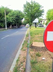Vedere din București. Semnul sens interzis și ceea ce a mai rămas dintr-un copac destul de falnic, în fața UEFS. Foto cu telefonul: Călin Hera