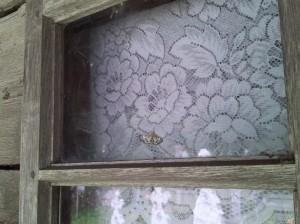 Fluture pe fereastră, în interior, la Biserica Grămești, Vâlcea. Foto cu telefonul: Călin Hera