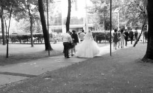 Vedere din București. Mireasa IOR iese din parc și pleacă la petrecere. Foto cu telefonul: Călin Hera