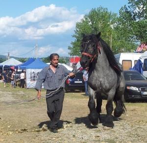 Cal bulonez prezentat cu mândrie în Bâlciul Polovragi. Foto cu telefonul: Călin Hera