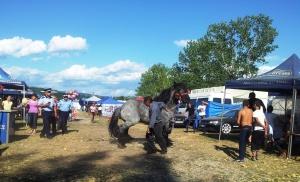 Polițiștii îi strigă omului să plece cu calul bulonez din Bâlciul Polovragi. Foto cu telefonul: Călin Hera