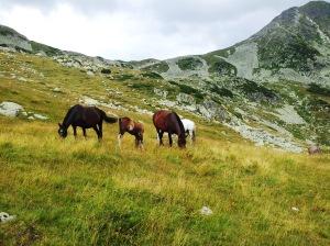 Munții Retezat. Cai sub Curmătura Bucurei. Foto cu telefonul: Călin Hera