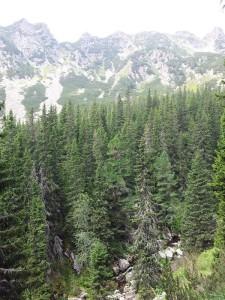 Munții Retezat. Coada Slăveiului văzută din apropiere de Poiana Pelegii. Foto cu telefonul: Călin Hera