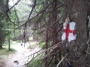 Munții Retezat. Marcaj cruce roșie în pădure, lângă Poaiana Pelegii. Foto cu telefonul: Călin Hera