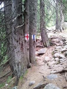 Munții Retezat. Marcaje bandă albastră și cruce roșie în pădure, lângă Poaiana Pelegii. Foto cu telefonul: Călin Hera