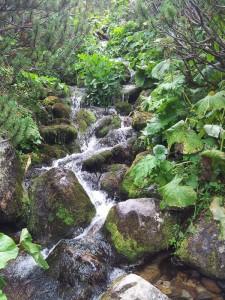 Munții Retezat. Pârâu pe drumul spre lacul Bucura. Foto cu telefonul: Călin Hera