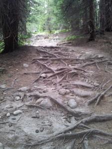 Munții Retezat. Relif cu rădăcini. Foto cu telefonul: Călin Hera