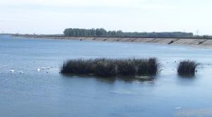 Zoom in. Lebede pe râul Olt, la Slatina. Foto cu telefonul: Călin Hera