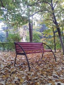 Vedere din Bucureşti. Bancă de toamnă în curtea FJSC. Foto cu telefonul: Călin Hera