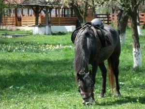Cal pe domeniul boierilor Golescu din Ștefănești, Argeș. Foto: Călin Hera