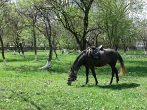 Cal pe domeniul boierilor Golescu din Ștefănești, Argeș (MfC). Foto: Călin Hera