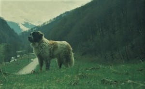 Havel, cel mai bun câine