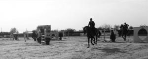 regatul cailor (2)